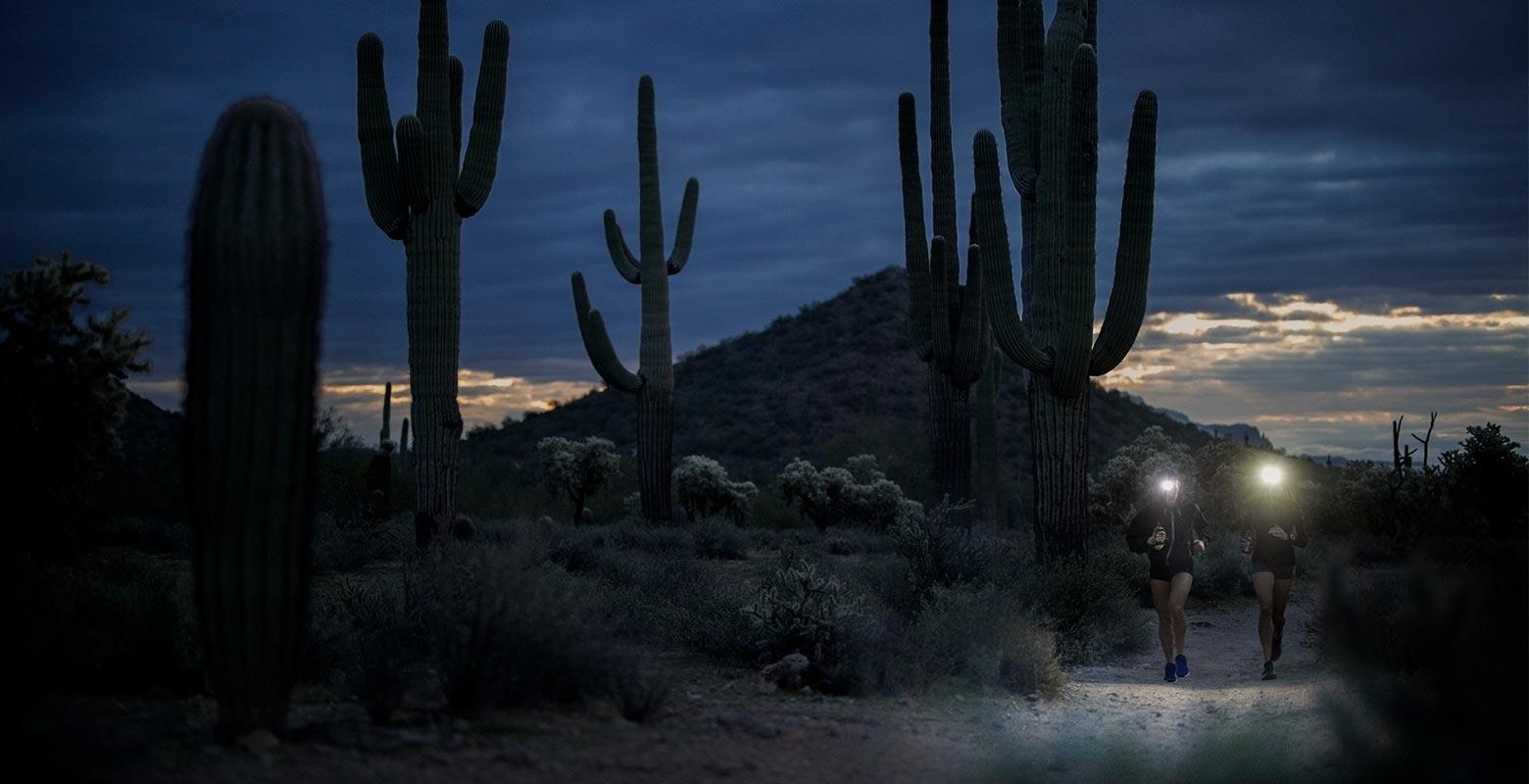 Morning runs through the cactus