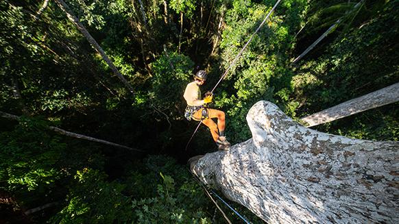 EnQuête d'arbres : explorations dans les forêts Africaines