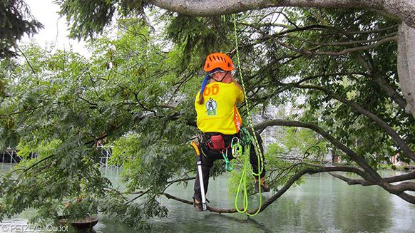Campionati europei di Treeclimbing: l'elite sulla cima degli alberi