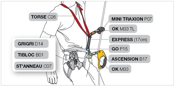 Installation on the harness and TORSE with two ascenders