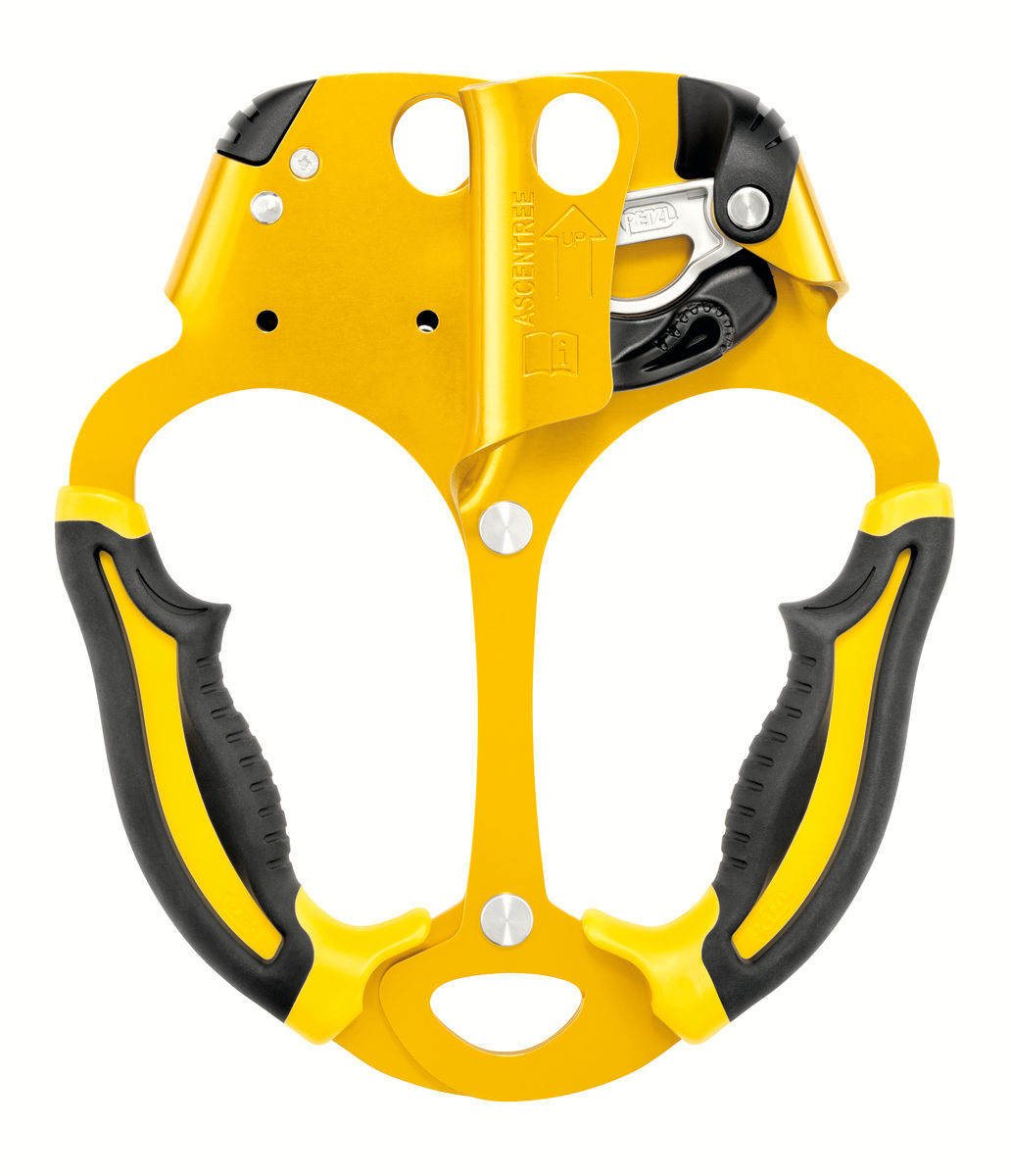 ASCENTREE