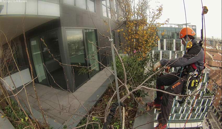 Petzl nachrichten baumpflege: ein hochhaus wie ein dschungel mitten