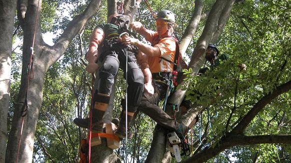 European Tree Climbing Championship