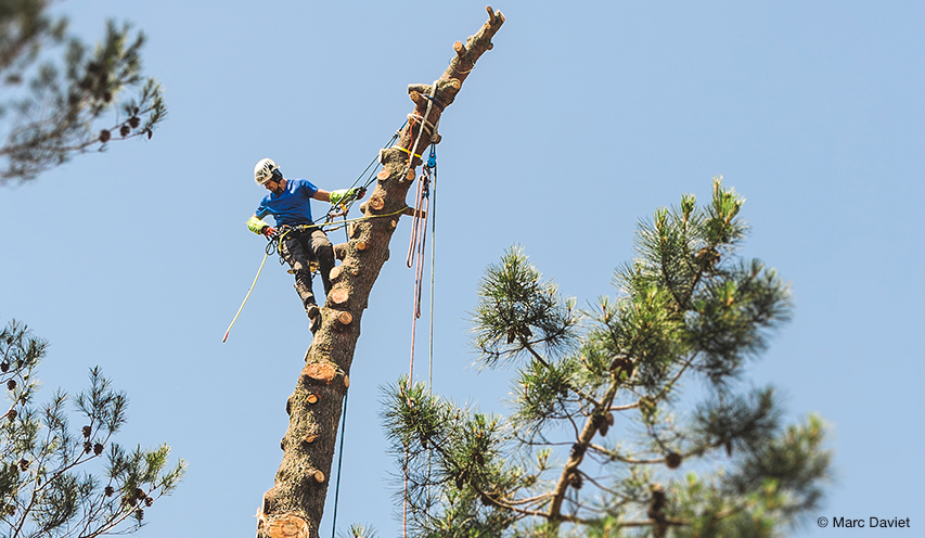 Tree removal: how to dismantle a tree