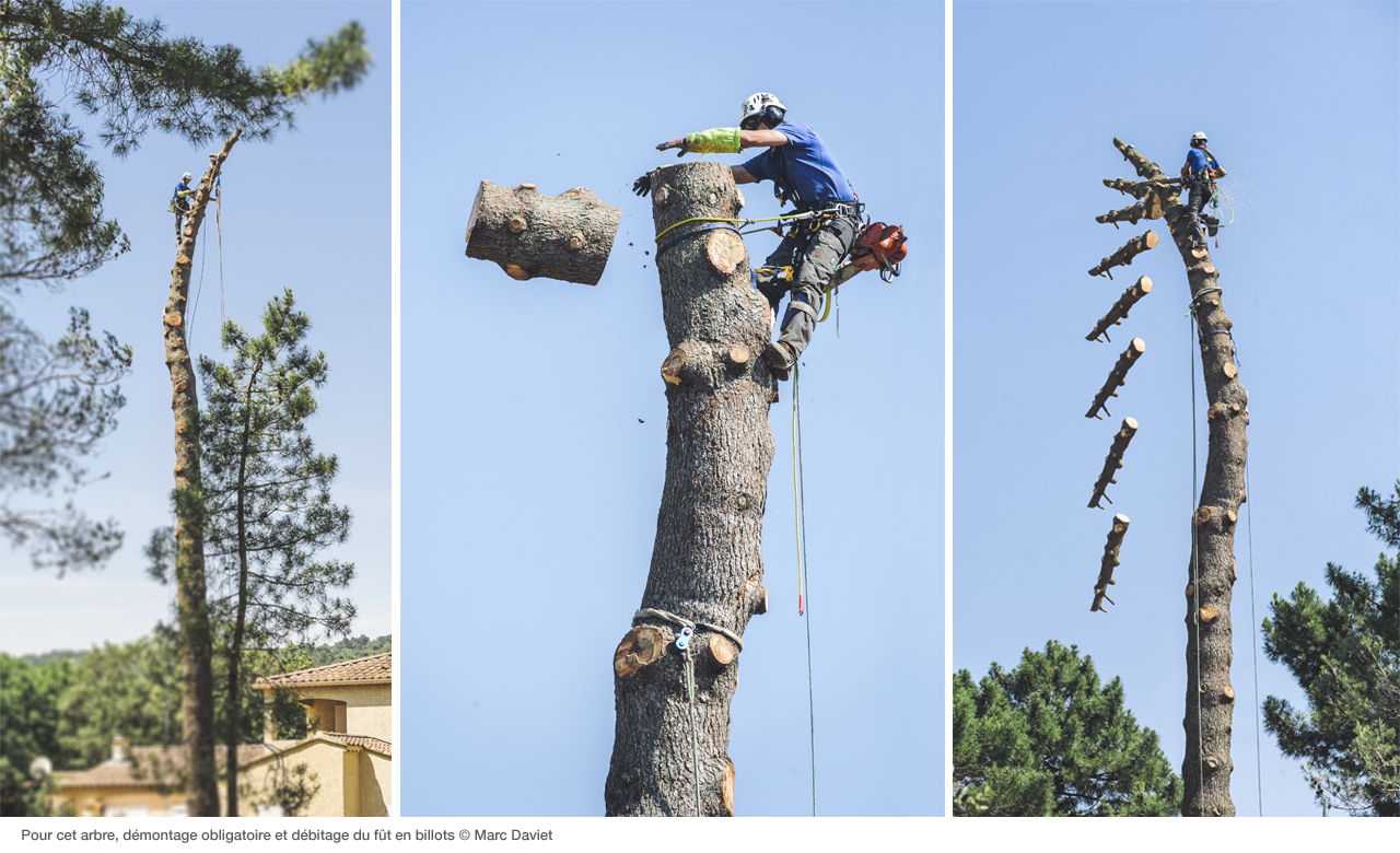 News Petzl Tree Removal How To Dismantle A Tree Petzl Usa