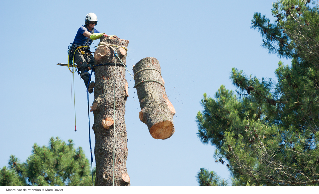 News - Petzl Tree removal: how to dismantle a tree - Petzl USA